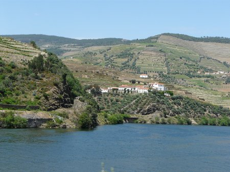 Vineyards abound in the Douro valley, which is a wonderful, lush suntrap