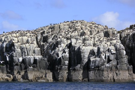 Staple Island from the Sea
