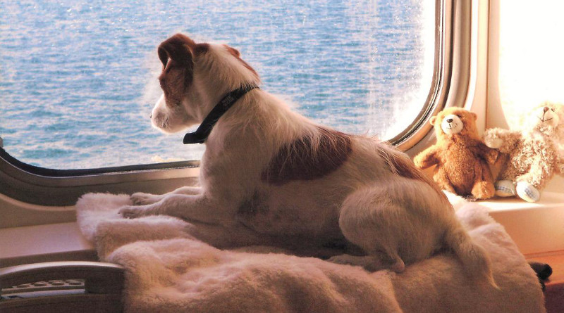 Dog on Brittany Ferries