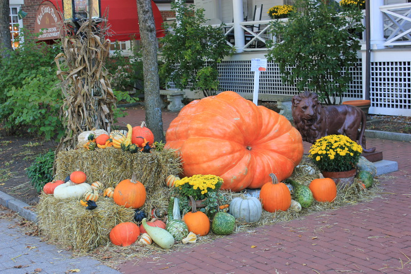 Pumpkin display in Stockbridge